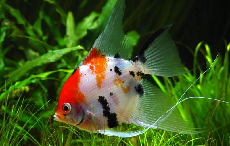 ماهی های زین...